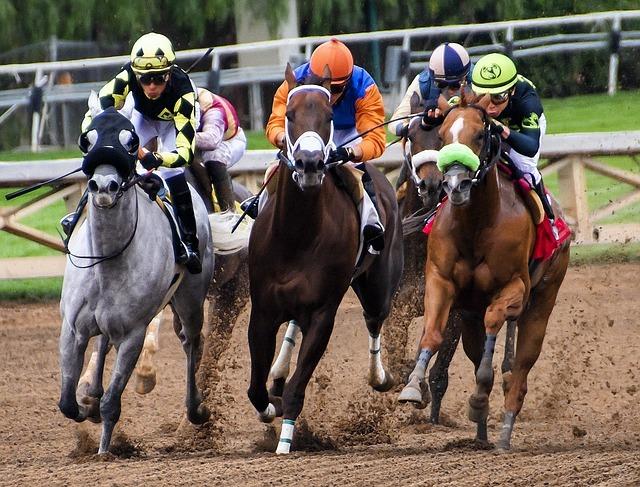 horses, racing, race